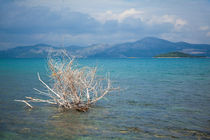 Coastline, Trsteno, Croatia von Tasha Komery