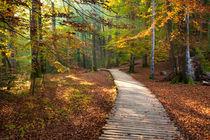 Autumn Pathway, Plitvice, Croatia von Tasha Komery