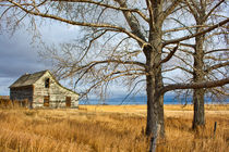 Haunted, Alberta, Canada von Tasha Komery