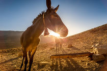 horse in marocco by Simon Andreas Peter