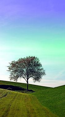 Einsamer Baum im Nirgendwo | Landschaftsfotografie von Patrick Jobst