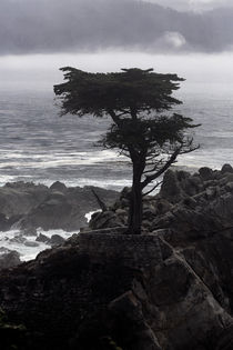 Lone Cypress by Dirk Noelle