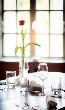 Tulpe vor dem Fenster von Ruby Lindholm