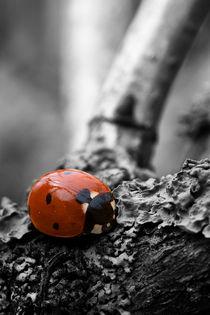 Marienkäfer Colorkey von maldesowhat