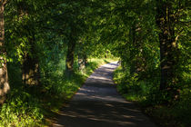 Summer Forest Road by Patrycja Polechonska