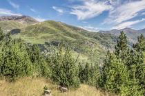 The Puigmal seen from the 'Collet de les Barraques' (Catalan Pyrenees) von Marc Garrido Clotet