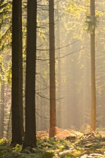 Eikamper Wald by © Ivonne Wentzler