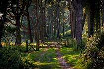 Whitford burrows gate by Leighton Collins