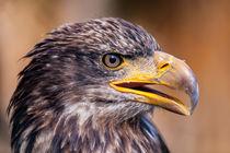 2014-09-27-wildpark-tripsdrill-0042