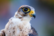 2014-09-27-wildpark-tripsdrill-0632