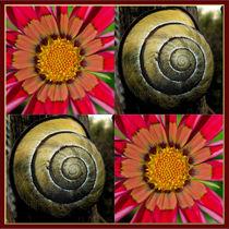 Viererbild-flora-und-fauna