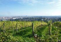 Vienna Vineyards by Barbara Seidl