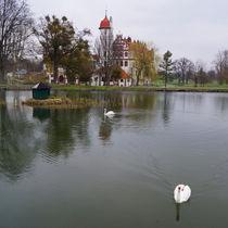 Schloss-basedow-teich-schwaene