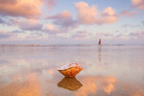 Seashell at Dawn von Alex Bramwell