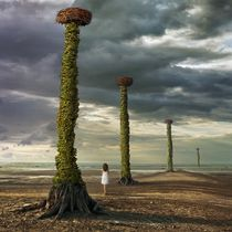 In search of the nest von Dariusz Klimczak