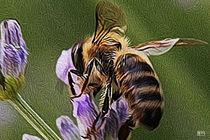 Honey Dew by Jim Pavelle