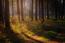 Autumn forest by larisa-koshkina