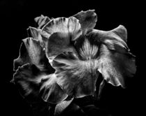 Backyard Flowers In Black And White 2 von Brian Carson