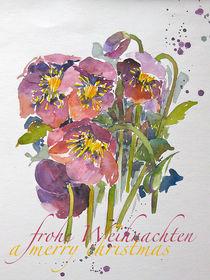 Christrose rosa by Sonja Jannichsen