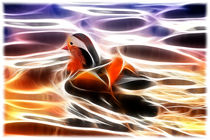 Mandarin Duck by mario-s
