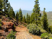 Wanderweg am Roque Nublo von gscheffbuch