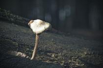 Pilz und Schnecke by maldesowhat