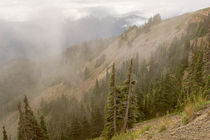 A View from Hurricane Ridge by Peter J. Sucy