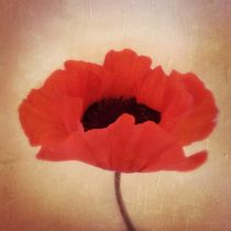 Red Poppy - Roter Mohn von Tania Konnerth