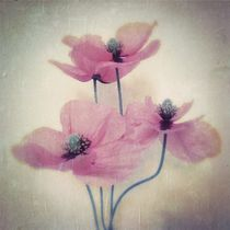 Dancing Poppies - Tanzender Mohn by Tania Konnerth