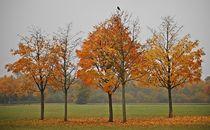 Herbstkraft 2 von loewenherz-artwork