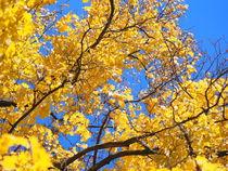 Gelb vor Blau by Jörn Paulig