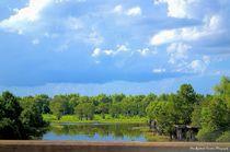 Louisiana Swamp, befor the Storm von Dan Richards