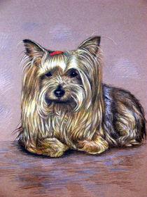 Yorkshire Terrier von Nicole Zeug