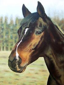 Pferde Portrait von Nicole Zeug