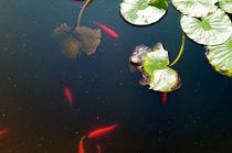 Goldfische & Seerosen von smk
