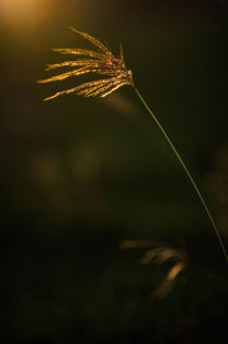 Wild Light von Mario Morales Rubi