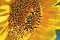 Sonnige Herbstblume von leddermann