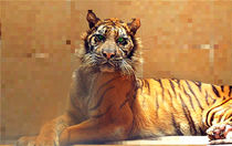 Melani The Miracle Tigress Pixel by bibi-photo-hunter