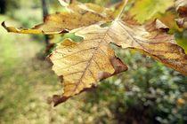 Herbstblatt / Autumn leave by nicolelovespictures