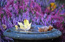 Herbstleuchten by loewenherz-artwork
