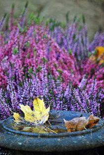 Herbstleuchten 2 von loewenherz-artwork