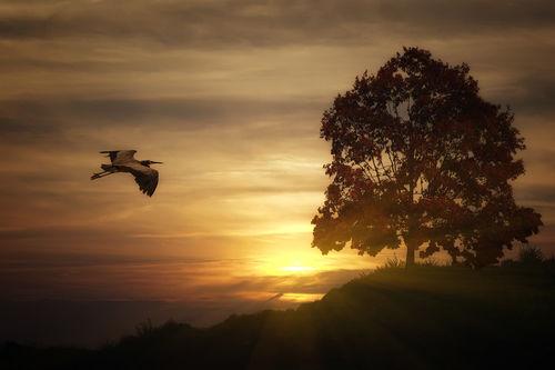 Heron-at-sunset