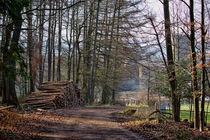 Waldweg von Dietmar Wolf