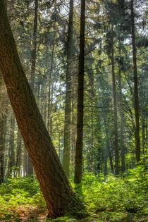 Sonniger Wald by maldesowhat