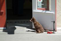 Waiting for business by Edith Breburda
