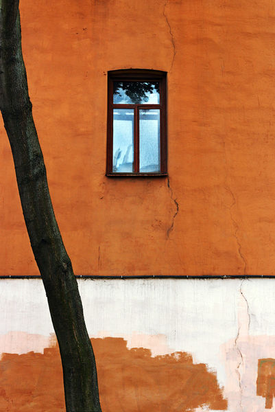Window-wall-tree