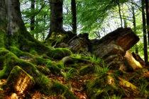 Märchenwald by maldesowhat