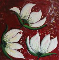 Magnolien mariso von mariso
