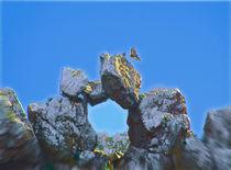 Eagles Window von crismanart