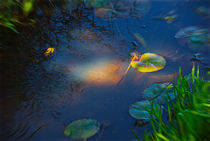 Water Lily Mystery by crismanart